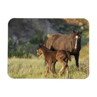 Wild Horses at Theodore Roosevelt National Park Rectangular Photo Magnet
