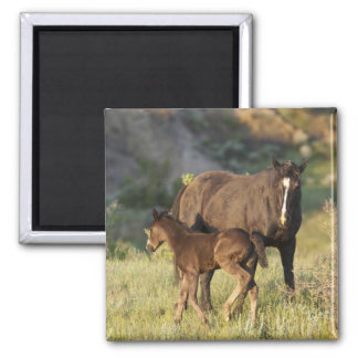 Wild Horses at Theodore Roosevelt National Park Square Magnet