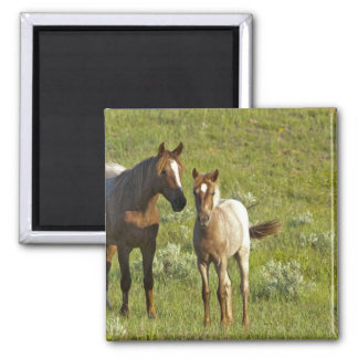 Wild Horses at Theodore Roosevelt National Square Magnet