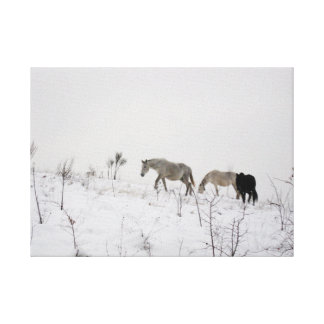 Wild Horses In Snow Single Canvas Print