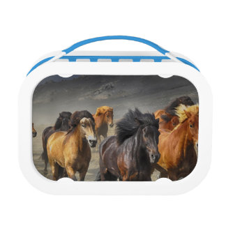Wild Horses Lunch Box