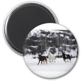 Wild Horses Magnet