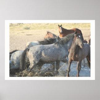 WILD HORSES OF ONAQUI MOUNTAINS OF UTAH POSTER