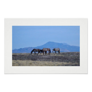 WILD HORSES OF ONAQUI MOUNTAINS OF UTAH POSTER