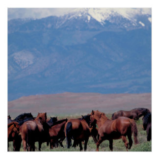 Wild Horses Out West Poster