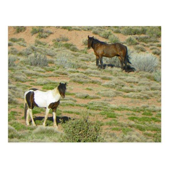 Wild Horses Postcard