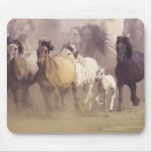 Wild horses running mouse pad