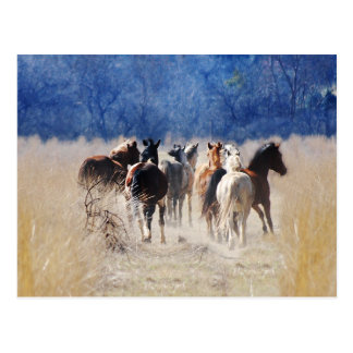 Wild horses running postcard