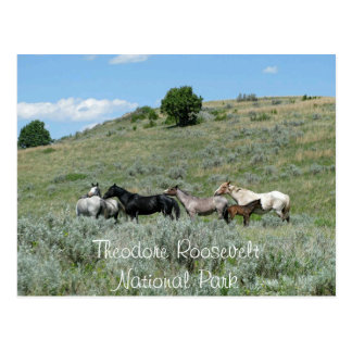 Wild Horses, Theodore Roosevelt NP, North Dakota Postcard