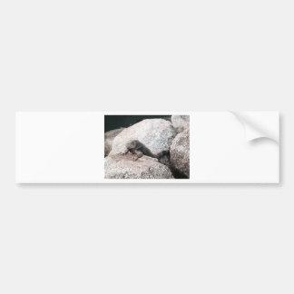 Wild Iguana Bumper Sticker