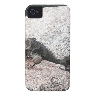 Wild Iguana iPhone 4 Cases