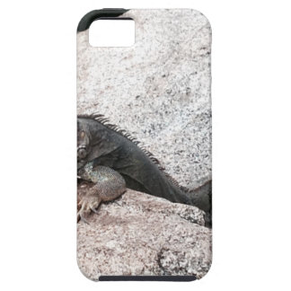 Wild Iguana iPhone 5 Case