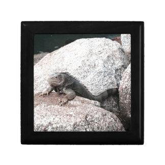 Wild Iguana Keepsake Boxes