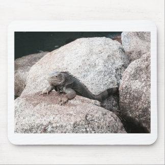 Wild Iguana Mouse Pad