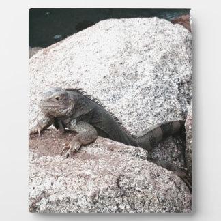 Wild Iguana Plaque