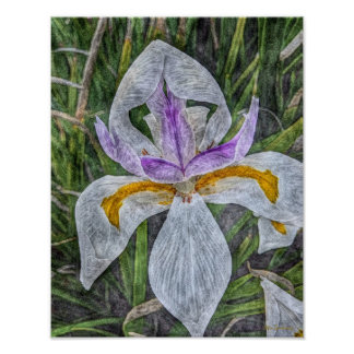 Wild Iris 11x14 Semi-Gloss Poster Print