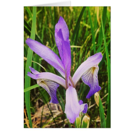 Wild Iris in the Brazos, New Mexico Card