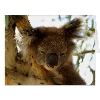 Wild koala sleeping on eucalyptus, Big Greeting Card