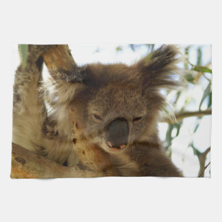 Wild koala sleeping on eucalyptus tree, Photo Hand Towel