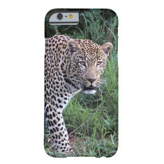 Wild leopard iPhone6 case