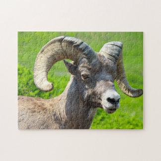 Wild Life Canada. Big Horn Sheep. Puzzles