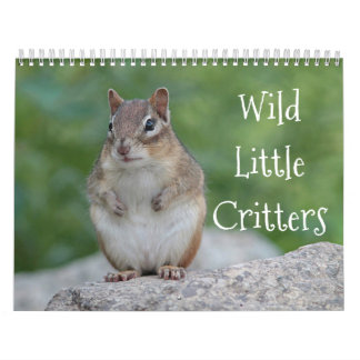 Wild little critters wall calendars