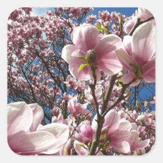 Wild magnolia (Spring, pink, Tulpenbaum) Square Sticker