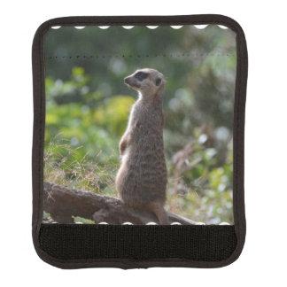 Wild Meerkat Handle Wrap