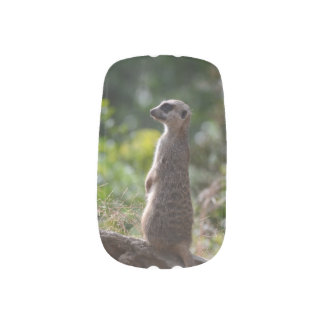 Wild Meerkat Nail Stickers
