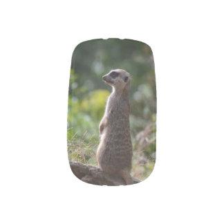 Wild Meerkat Nails Sticker