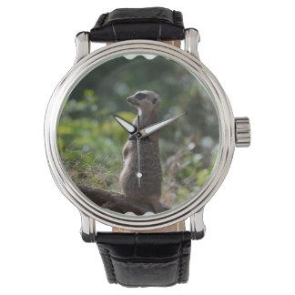 Wild Meerkat Wristwatches