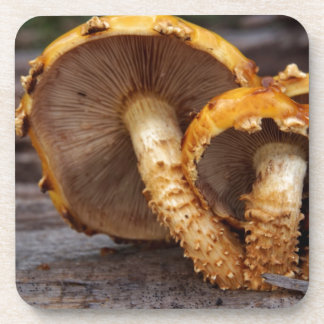 Wild Mushrooms Beverage Coaster