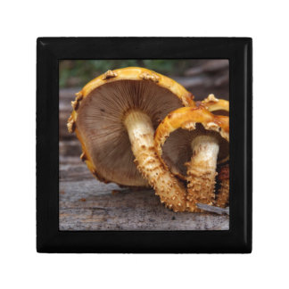 Wild Mushrooms Gift Box