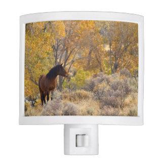 Wild Mustang Among Fall Colors Night Light
