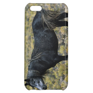 Wild Mustang Horse in the Desert Cover For iPhone 5C
