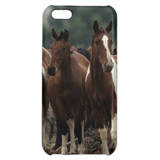 Wild Mustang Horses 7 iPhone 5C Case