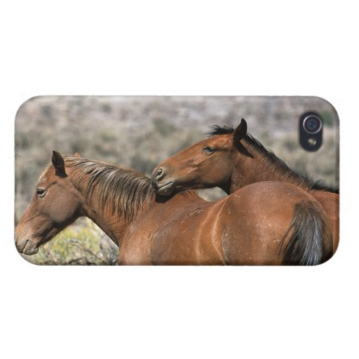 Wild Mustang Horses Touching iPhone 4 Case