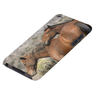 Wild Mustang Horses Touching iPod Touch Cases