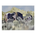 Wild Mustang Mare and Foal Postcard