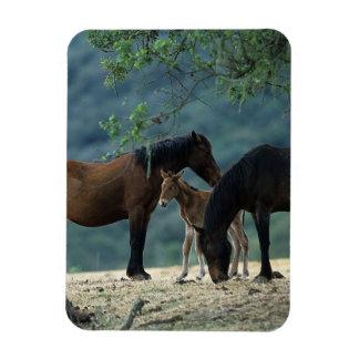 Wild Mustang Mare & Foal Rectangular Photo Magnet