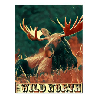 Wild North Moose Postcard