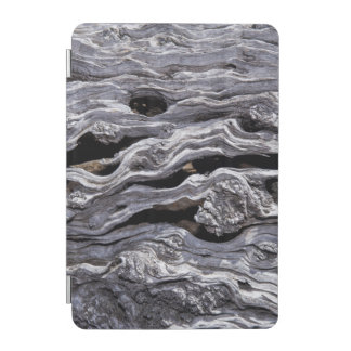 Wild Olive Tree | Great Karoo, South Africa iPad Mini Cover