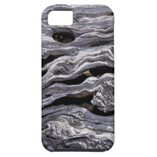 Wild Olive Tree | Great Karoo, South Africa iPhone 5 Case