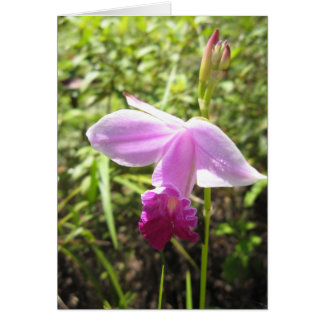 Wild Orchid - Customized Card