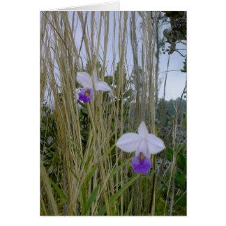Wild Orchid Notecards, Big Island, Hawaii Card