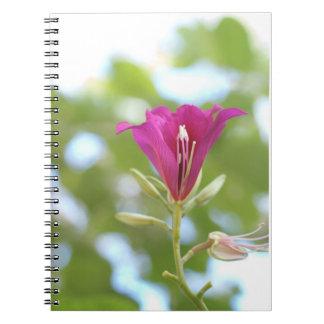 Wild Orchid Tree Flower Spiral Notebook