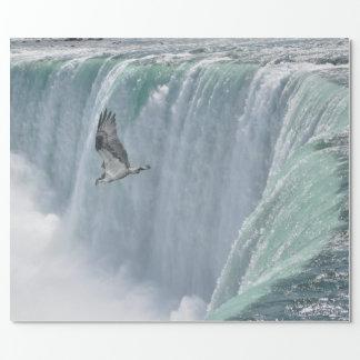 Wild Osprey Flying over Niagara Falls, Ont. Canada