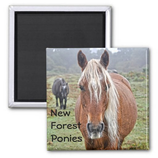 Wild Palomino New Forest Ponies Horse-lover Gift Fridge Magnet