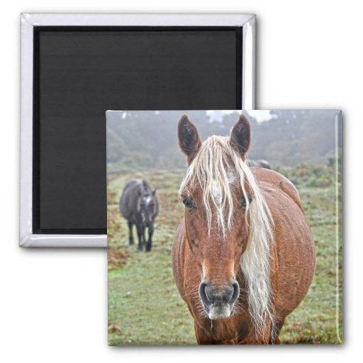 Wild Palomino New Forest Pony Horse-lover's Gift Fridge Magnets