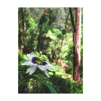 Wild Passiflora in the Hawaiian rain forest. Canvas Print